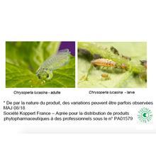 Macro organismes de lutte biologique