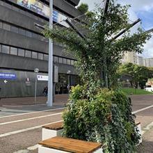 Structure parasol végétale ombragée