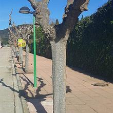 Tour d'arbre drainant