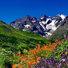 Enherbement Montagne